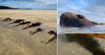 Experts are unsure which ship these remains are from (Picture: Cornwall Live/BPM Media)